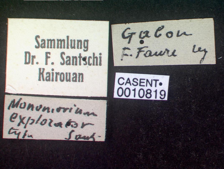 Image of Monomorium madecassum